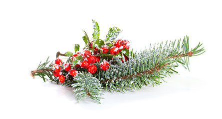 Holly leaves and berries with a pine branch on a white backgroun
