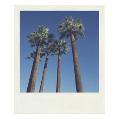 Palmiers - Photo instant vintage