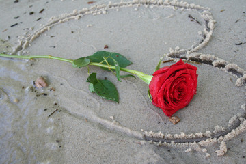 Romantic Red Rose Laying on a Hand Drawn Heart in Beach Sand