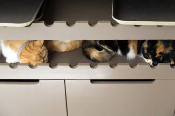 Cats sleeping on shelf.