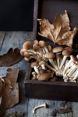 mushrooms on old wooden box on rustic table with dry leafs