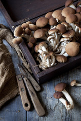 fresh picked mushrooms on vintage wooden box with knives