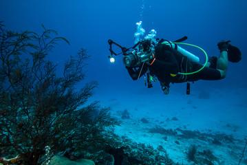Diver, sea fan Rumphella sp. in Derawan, Kalimantan underwater Wall mural