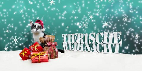 Tierische Weihnacht Cat Christmas Snow