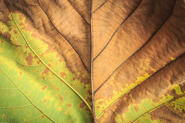 Close up tree leave tuxture for background