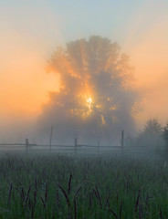 thick fog in the field