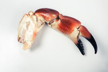 Crab claw on a plate