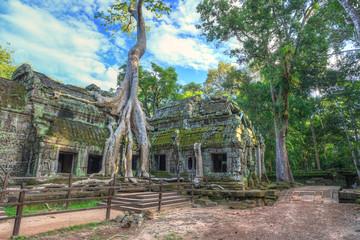 Ta Prohm Temple at Angkor Wat, Siem Reap Cambodia