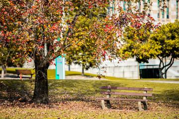 bench in park Autumn season.