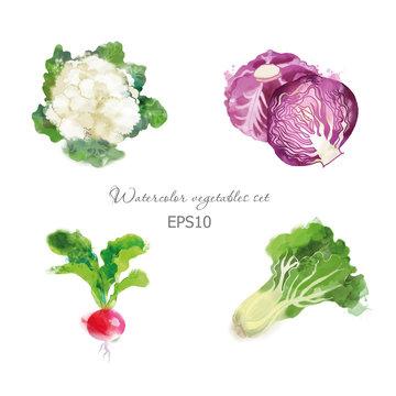 Set of cauliflower red cabbage radish lettuce
