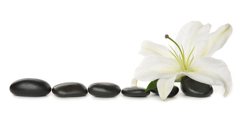 White lily and stones