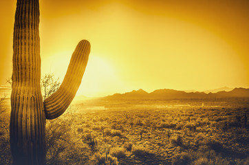 Foto op Canvas Arizona Saguaro cactus tree desert landscape, Phoenix, Arizona.