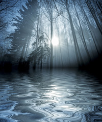 an autumn forest and fog above water level