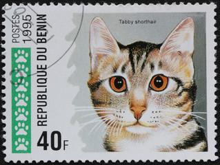 Timbre chat du Benin