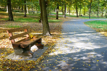 Wooden bench in the autumn park