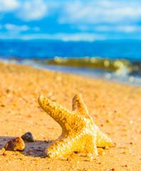 Fallen Star On a Beach