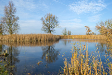 The shore of a lake with reed in autumn