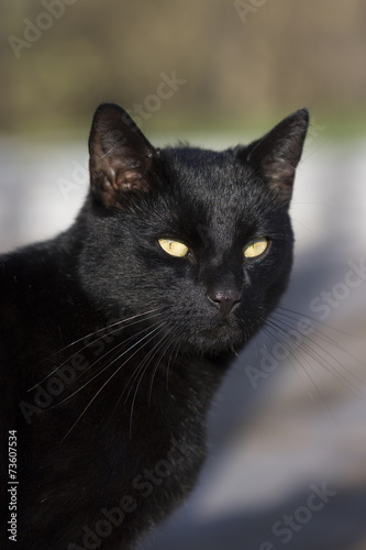 katze draussen stock photo and royalty free images on pic 73607534. Black Bedroom Furniture Sets. Home Design Ideas