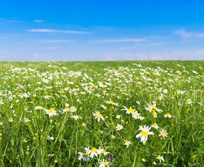 Summer Beauty On a Meadow Green Horizon
