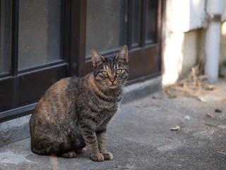 玄関前に座る猫