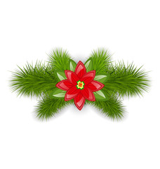 Christmas composition with fir twigs and flower poinsettia, isol