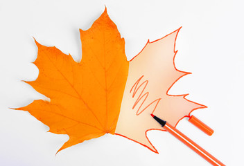 Autumn leaf with painted contour isolated on white