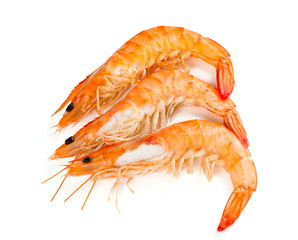cooked shrimps isolated on white