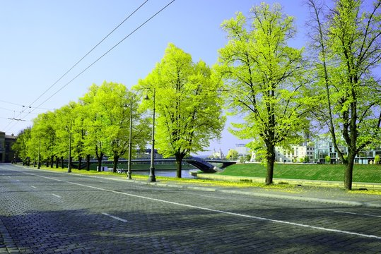 Green trees in the city adjacent to the street