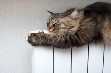 Tabby cat lying a warm radiator