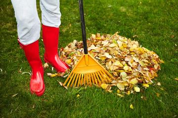 Fall leaves with rake