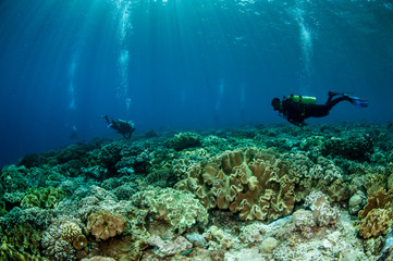 Divers and mushroom leather corals in Banda,Indonesia underwater
