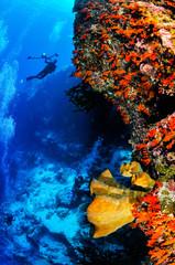 Divers and sponges in Banda, Indonesia underwater