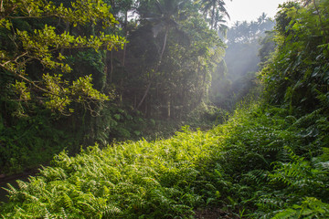 Morning river in Bali