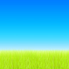 Green field and blue sky. Vector