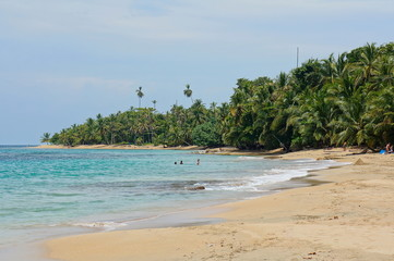 Central America beach with lush tropical vegetation