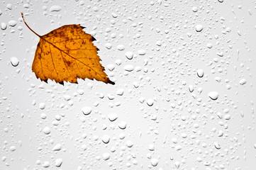 Kolorowy jesienny liść i krople deszczu na oknie