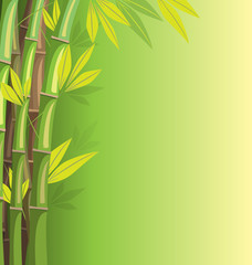 Green bamboo on green background with shadows
