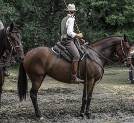Buttero sul cavallo