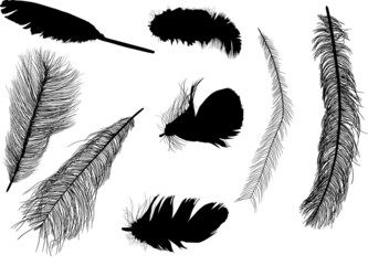 eight feather silhouettes isolated on white