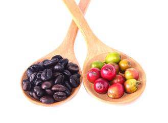 Wall Mural - Fresh coffee beans in spoon with white background
