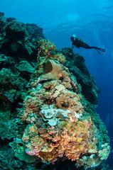 Divers, mushroom leather coral, coral reefs in Banda underwater