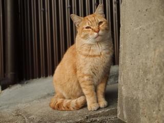 街角の茶トラ猫
