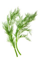 fresh dill herb leaves. food ingredient