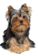 Portrait of one puppy