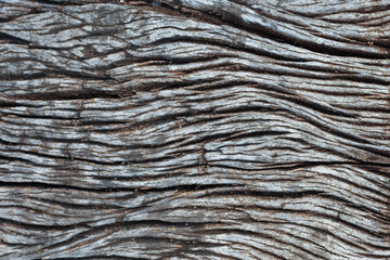 decay wood