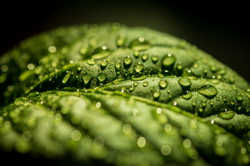 Green leaf with water drops, selective focus.