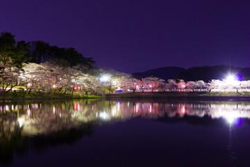 高松の池の夜桜