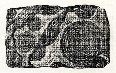 Rock from foraminifera shells