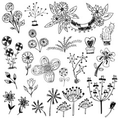 flower sketch vector set