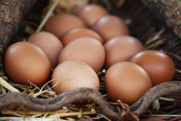Lot of fresh eggs